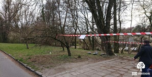 veszélyes fa kivágása