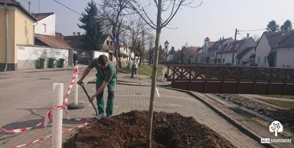 zöldfelületek takarítása