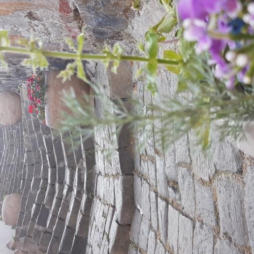 A lépcső virága