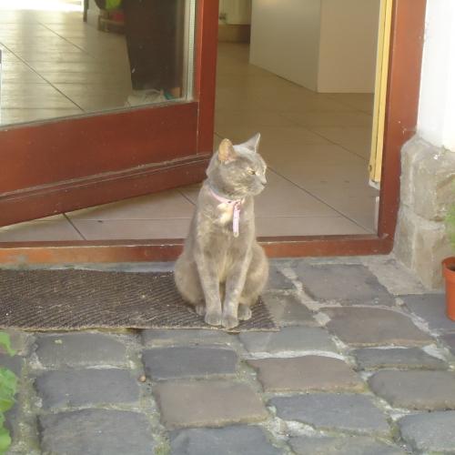 Kis bolt cicája:)..:)